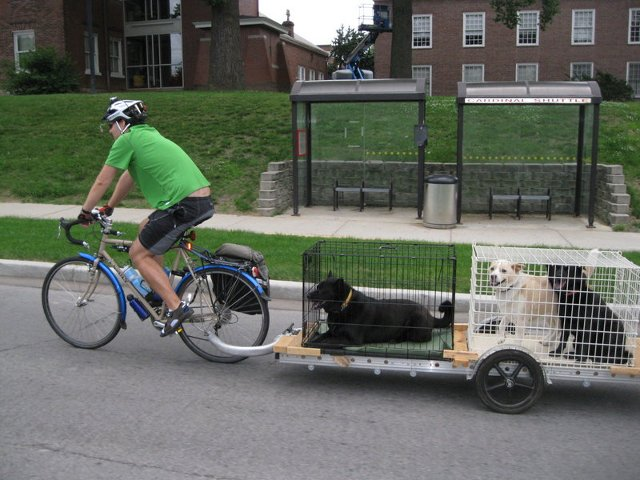 carrying two dogs in kennels on a 96A bicycle trailer